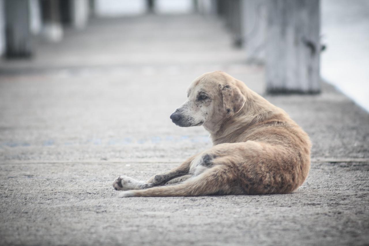 Cada mes 219 perros son abandonados en Barcelona